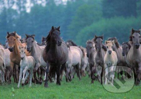 Cválajúce kone -