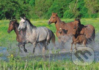 Stádo koní -