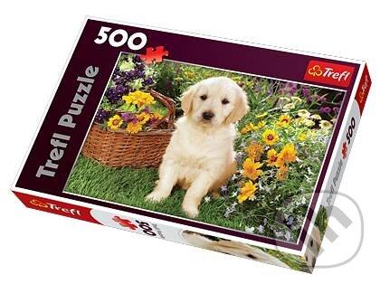 Malý labrador na záhrade -