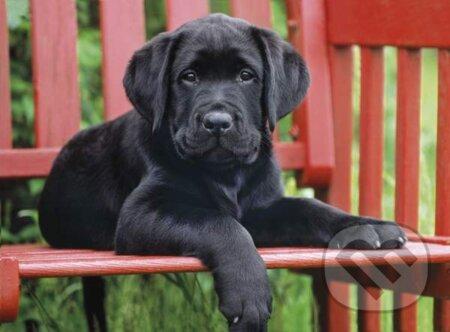 Čierny pes -