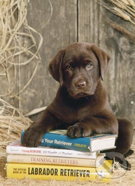 Ležiaci na knihách -