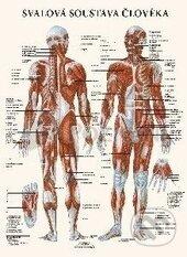 Svalová soustava člověka (mapa) - Josef Vik