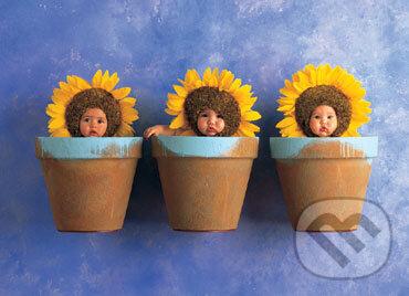 Trio slnečníc - Anne Geddes