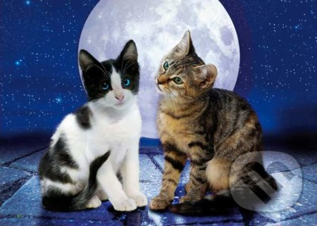 Cats in the Moonlight -