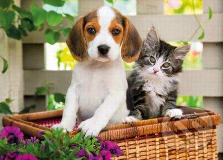 Pes a mačka -