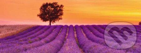 Levandulové pole -
