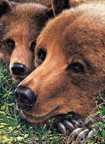 Spokojný medveď -