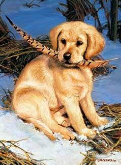 Malé šteniatko -